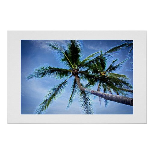 Posters de las palmeras