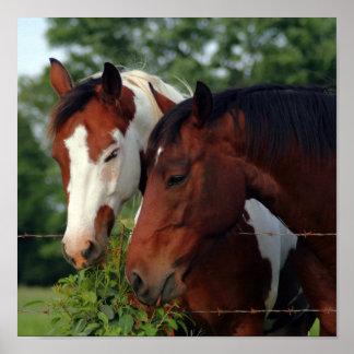 Posters del caballo de la fotografía