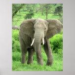 Posters del elefante