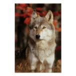 Posters del lobo del otoño