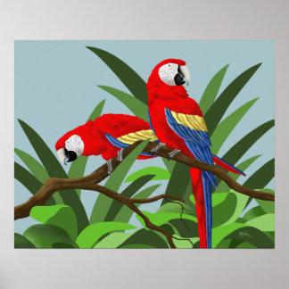 Posters del Macaw del escarlata