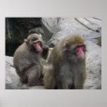 Posters del mono