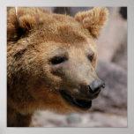 Posters del oso de Kodiak