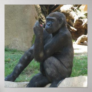 Posters pensativos del gorila