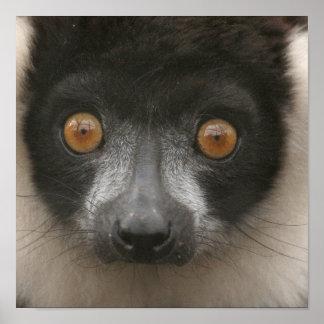 Posters rizados del Lemur