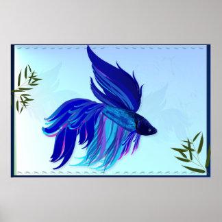 Posters siameses blancos azules de los pescados de