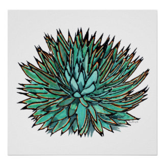 Posters - Spiky Green Agave