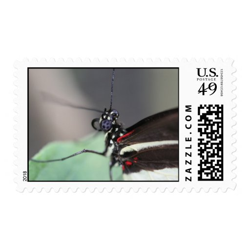 Postman Butterfly (Heliconius erato) Postage Stamps
