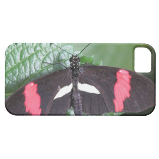 Postman Butterfly iPhone 5 Case