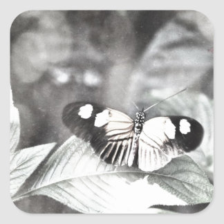 Postman Butterfly Square Sticker