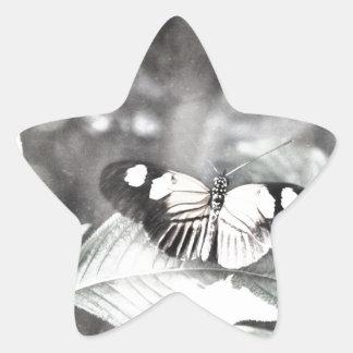 Postman Butterfly Star Sticker