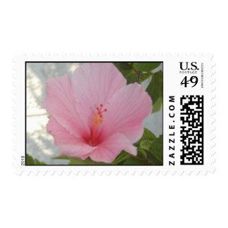 Poststamps rosados de la petunia
