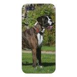 Postura Brindle de la exposición canina del boxead iPhone 5 Carcasas
