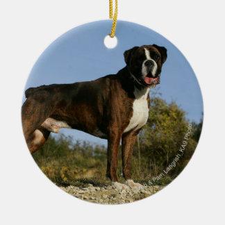 Postura de la exposición canina del boxeador adorno redondo de cerámica