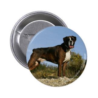 Postura de la exposición canina del boxeador pin redondo 5 cm