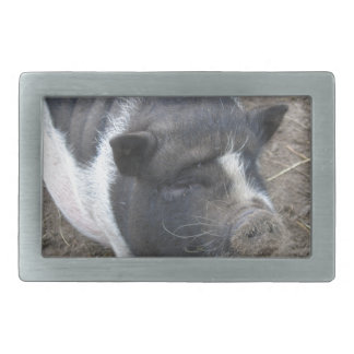 Pot Bellied Pig Belt Buckle