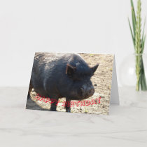 Pot bellied pig Birthday card