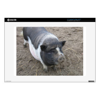 "Pot Bellied Pig Decals For 15"" Laptops"