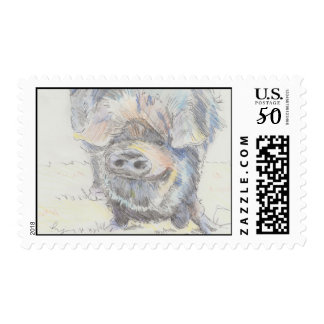 Pot bellied pig drawing postage stamps