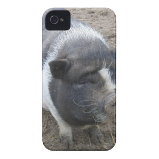 Pot Bellied Pig iPhone 4 Cover