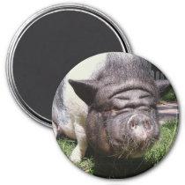 Pot Bellied Pig Magnet
