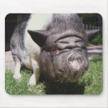 Pot-Bellied Pig Mousepad
