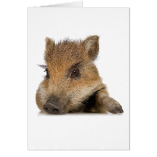 pot bellied pig piglet vector greeting card