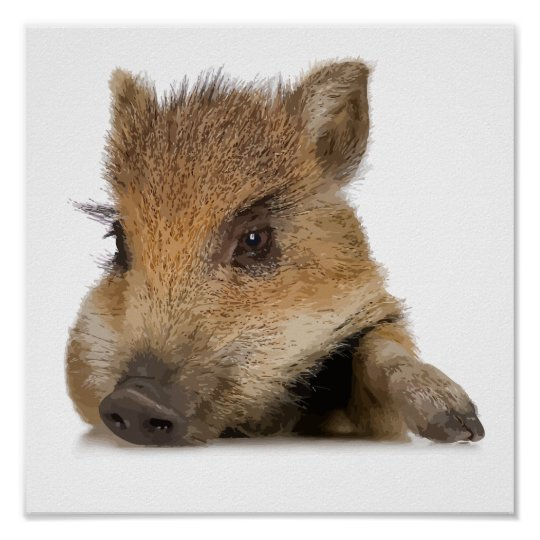 pot bellied pig piglet vector poster