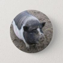 Pot Bellied Pig Pinback Button