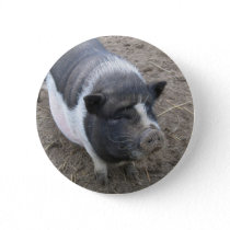 Pot Bellied Pig Pinback Button