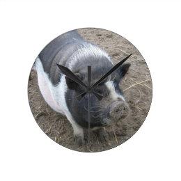 Pot Bellied Pig Round Clock
