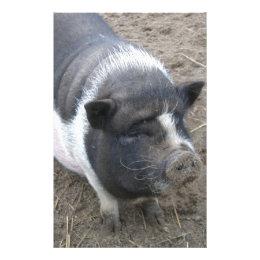 Pot Bellied Pig Stationery