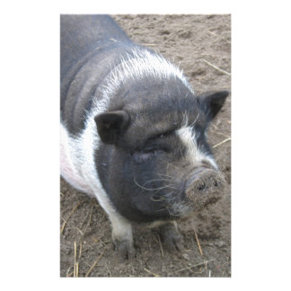 Pot Bellied Pig Stationery