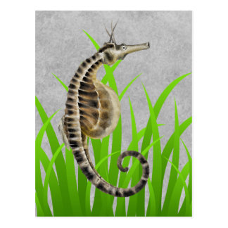 Pot Bellied Sea Horse Animal Print Postcard