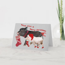 Pot Belly Pig Merry Christmas Holiday Card
