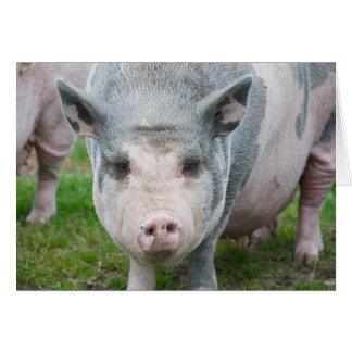 Pot Belly Pig, Norfolk UK Card