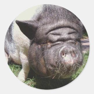 Pot Belly Pig Sticker