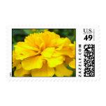Pot Marigold Stamp