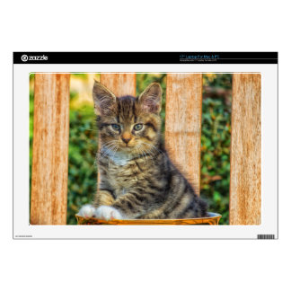 """Pot Of Baby Kitten Decal For 17"""" Laptop"""