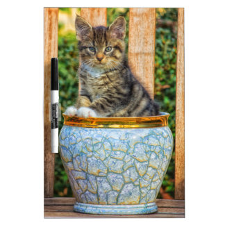 Pot Of Baby Kitten Dry-Erase Board
