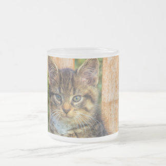 Pot Of Baby Kitten 10 Oz Frosted Glass Coffee Mug