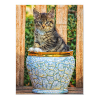 Pot Of Baby Kitten Photo Print