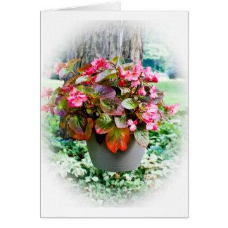 Pot of Begonias Card