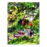 Pot of Geraniums Near Steps Postcard