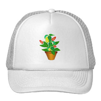 Pot with red and yellow pepper plant hats