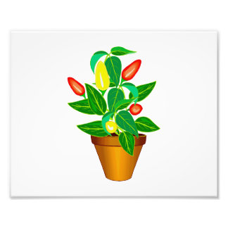 Pot with red and yellow pepper plant art photo