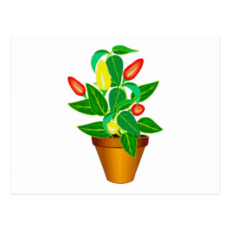 Pot with red and yellow pepper plant postcard