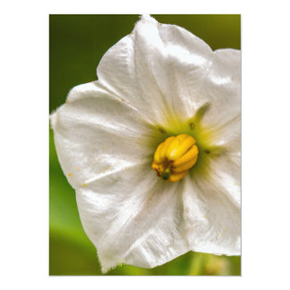 Potato bloom card