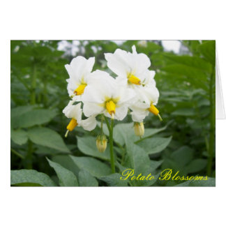 Potato Blossoms Notecard