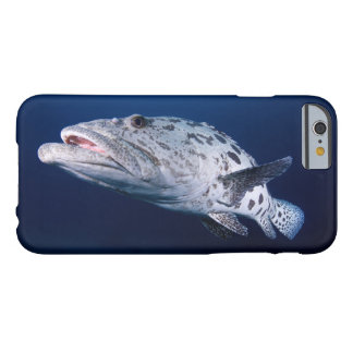 Potato Cod at the Cod Hole Barely There iPhone 6 Case